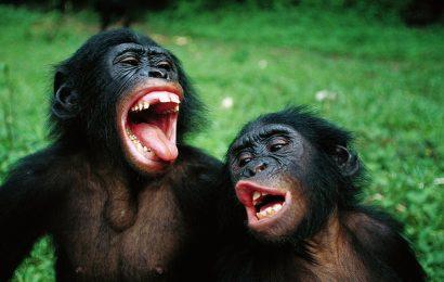Kojenci používají stejný lexikon jako šimpanzi