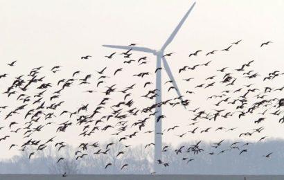 Nejnovější nápad vlády: Chce větrníky za 12 miliard