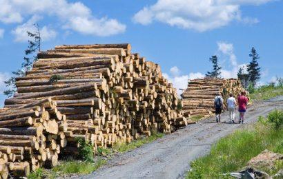 Lesy ČR darují každému majiteli tornádem poničeného domu až 70 kubíků dřeva