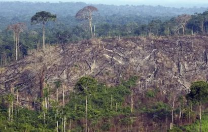 Amazonie ztratila schopnost zadržovat CO2